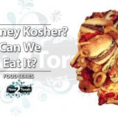 Is Honey Kosher – Can We Eat It?