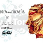 Unclean Animals In Torah